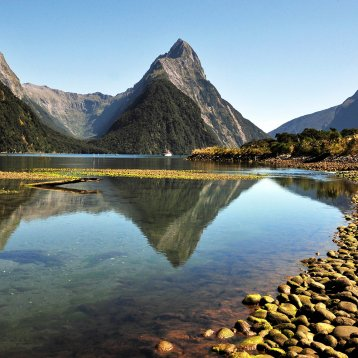 Four new New Zealand Music Festival Trips added!
